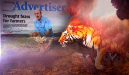 tiger-drought-collage560